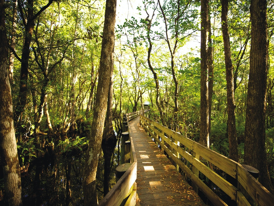 Six Mile Cypress Slough Preserve Fort Myers Florida United States