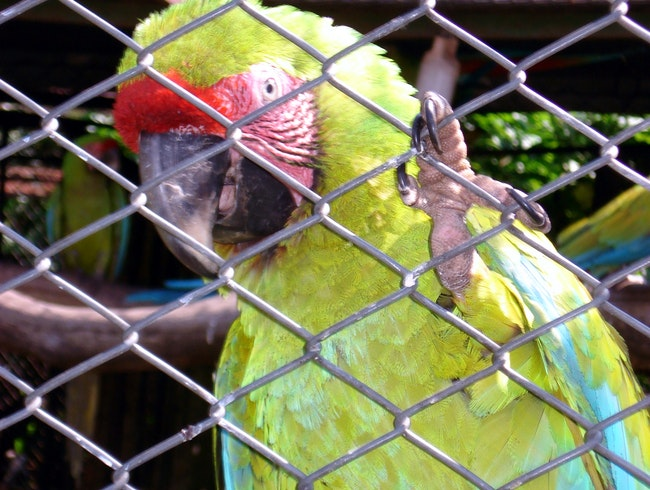 Great Macaw Conservation Park