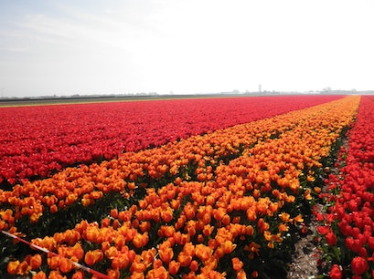 Keukenhof Lisse  The Netherlands