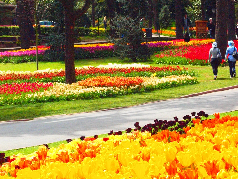 Tip toe through the tulips of Turkey Istanbul  Turkey