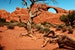 Magic Tree in Moab