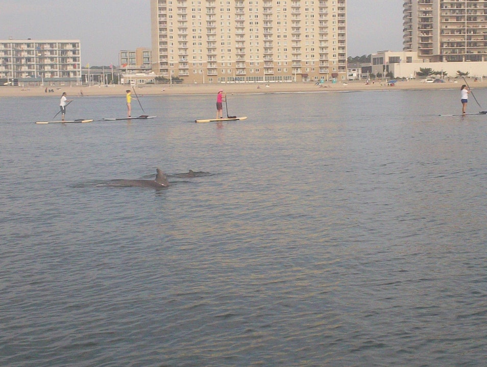 Stand Up Paddle and Sunset Yoga Virginia Beach Virginia United States