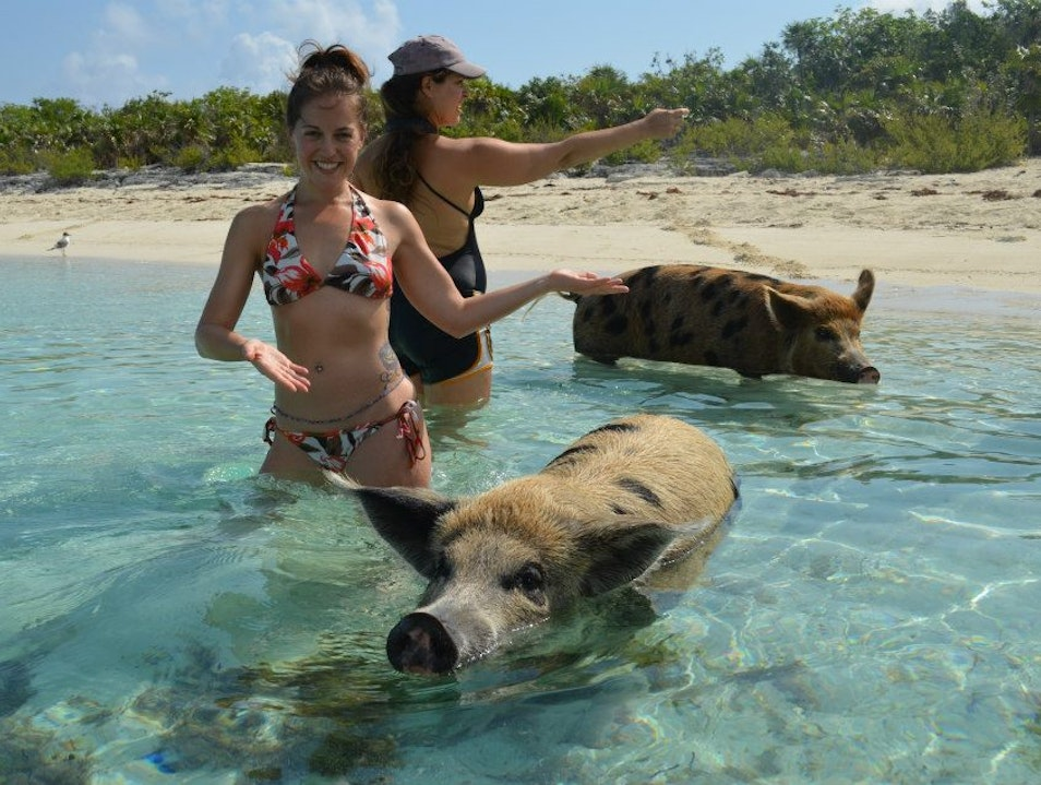 Swimming with Pigs at Big Major Spot in the Exumas