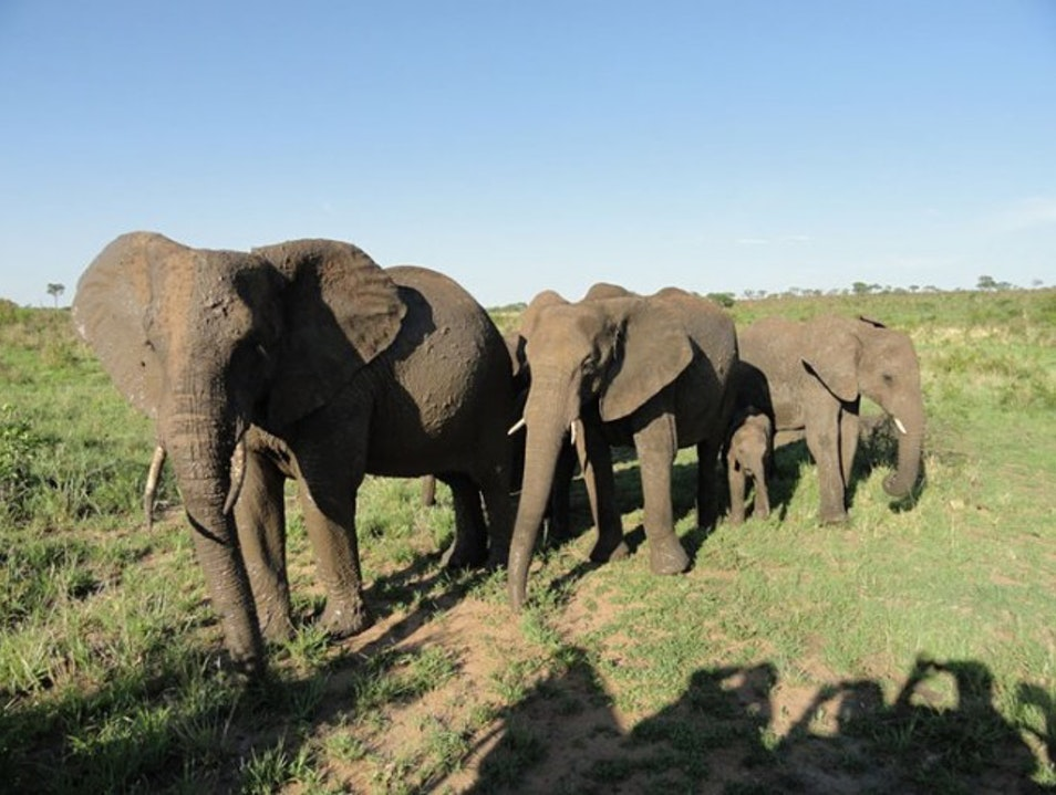 On Safari with Singita: 'Don't Get Out of the Truck' Kruger Park  South Africa