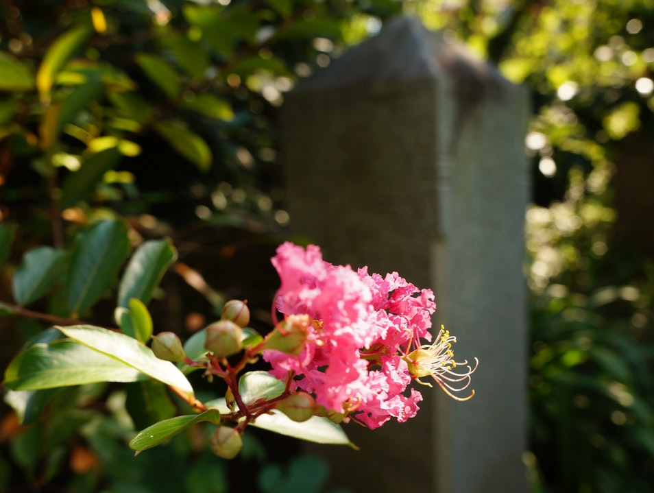 A Beautiful Cemetery in the Heart of Charleston Charleston South Carolina United States