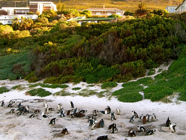 Beach Time with Penguins