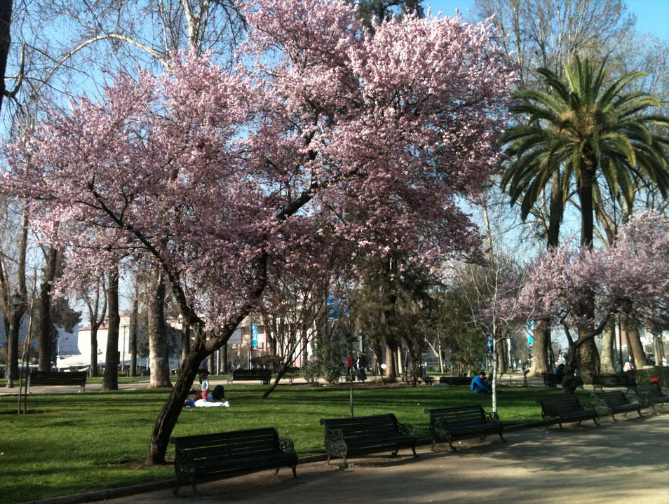 Stroll the Capital's Lush Parks Maipú  Chile