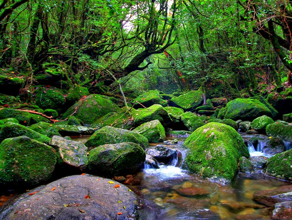 Fairytale Moss and Mist on Yakushima, Japan Yakushima  Japan