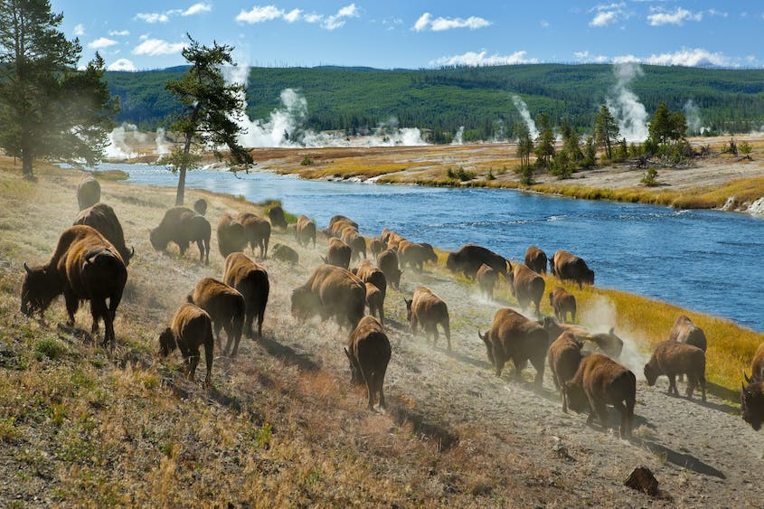 Yellowstone National Park in Wyoming is a popular destination for road tripping RVers.