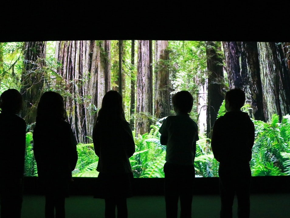 Become an Agent of Change at Cool Planet Experience   Ireland