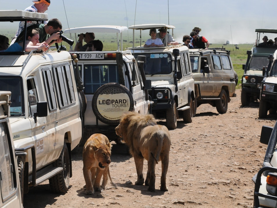 """Madagascar 3: Return to Africa"" Inspiration Ngorongoro  Tanzania"