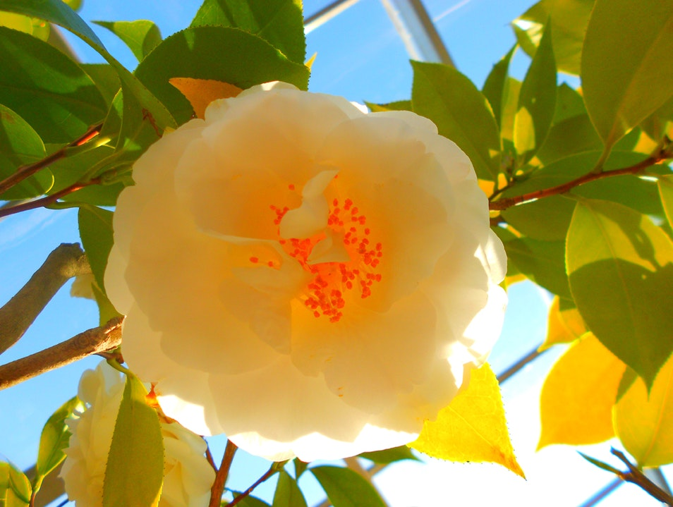 Exotic Flowers and Plants from All over the World