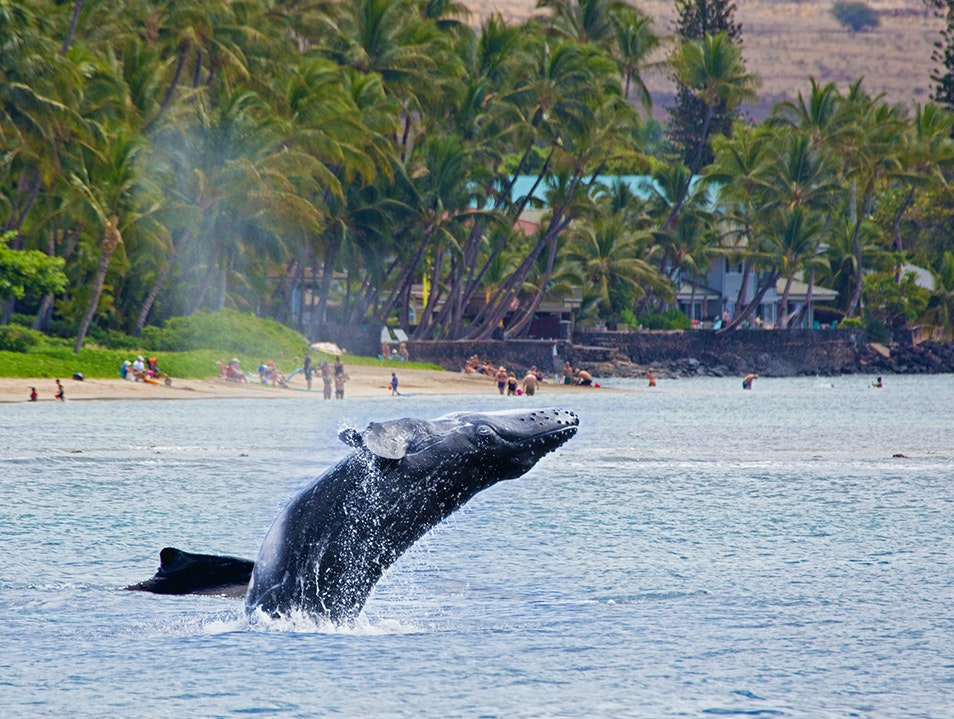 Whale-Watching Lahaina Hawaii United States