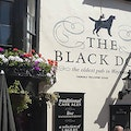 The Black Dog Weymouth  United Kingdom