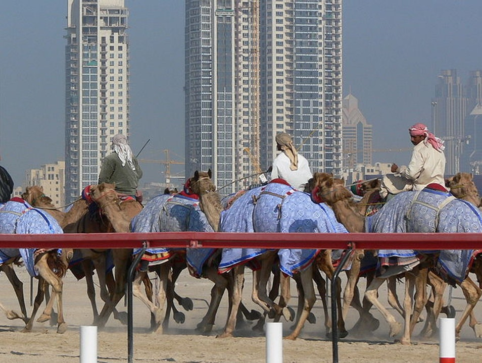 Camels & Robots at Marmoum Camel Racetrack Dubai  United Arab Emirates
