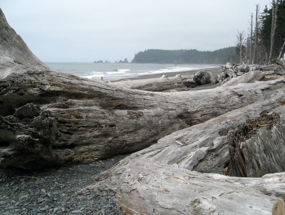 Gorgeous Pacific Northwest Beach and Coastal Forest Forks Washington United States