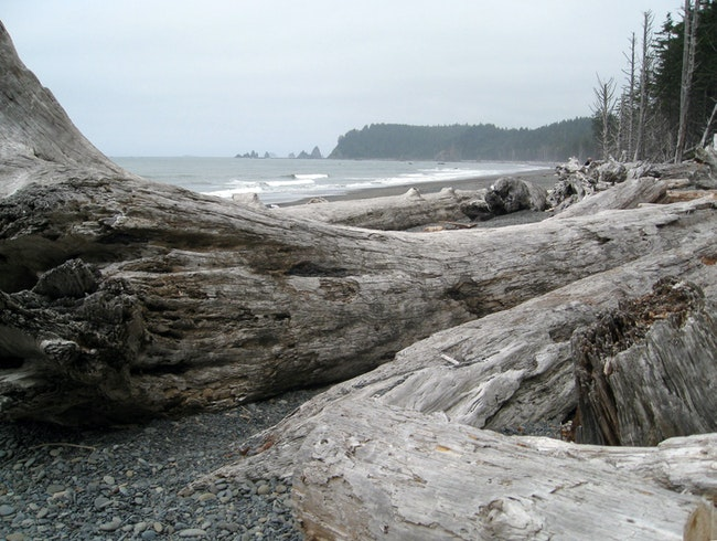 Gorgeous Pacific Northwest Beach and Coastal Forest