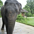Thai Elephant Conservation Center Wiang Tan  Thailand