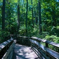 First Landing State Park Virginia Beach Virginia United States