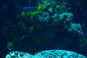 On Land and At Sea in Cancun and the Riviera Maya