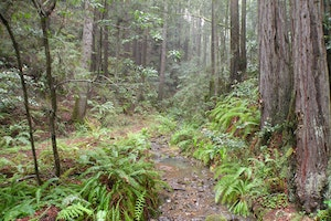Kruse Rhododendron State Reserve