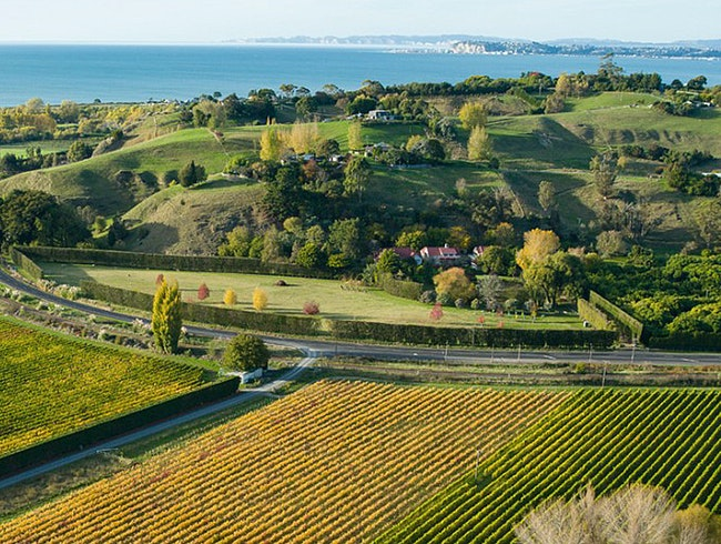 Hawke's Bay Wineries