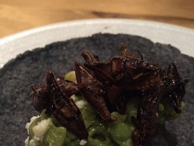 Calavera: Oaxacan Focused Mexican in the East Bay