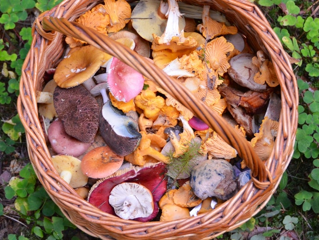 Foraging for Woodland Gems