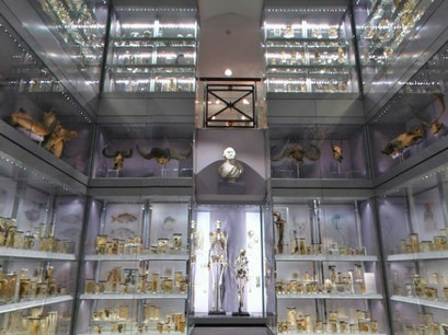 Hunterian Museum London  United Kingdom