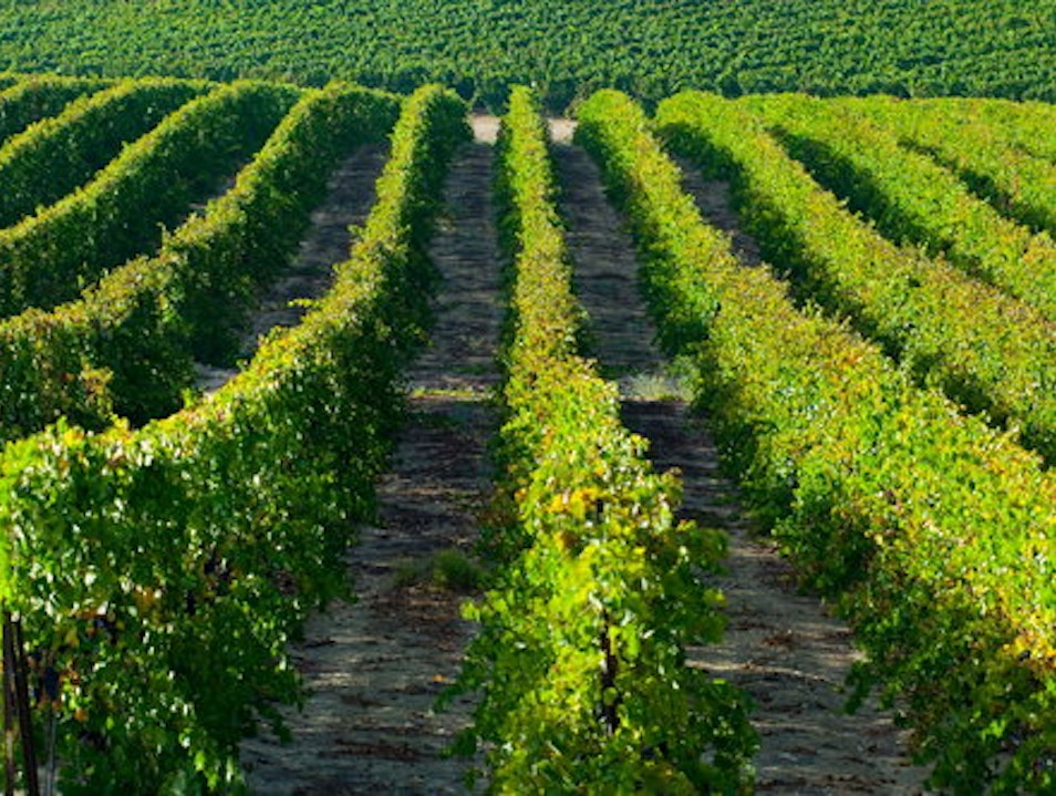 The Wines of Israel: World-Class Vintages