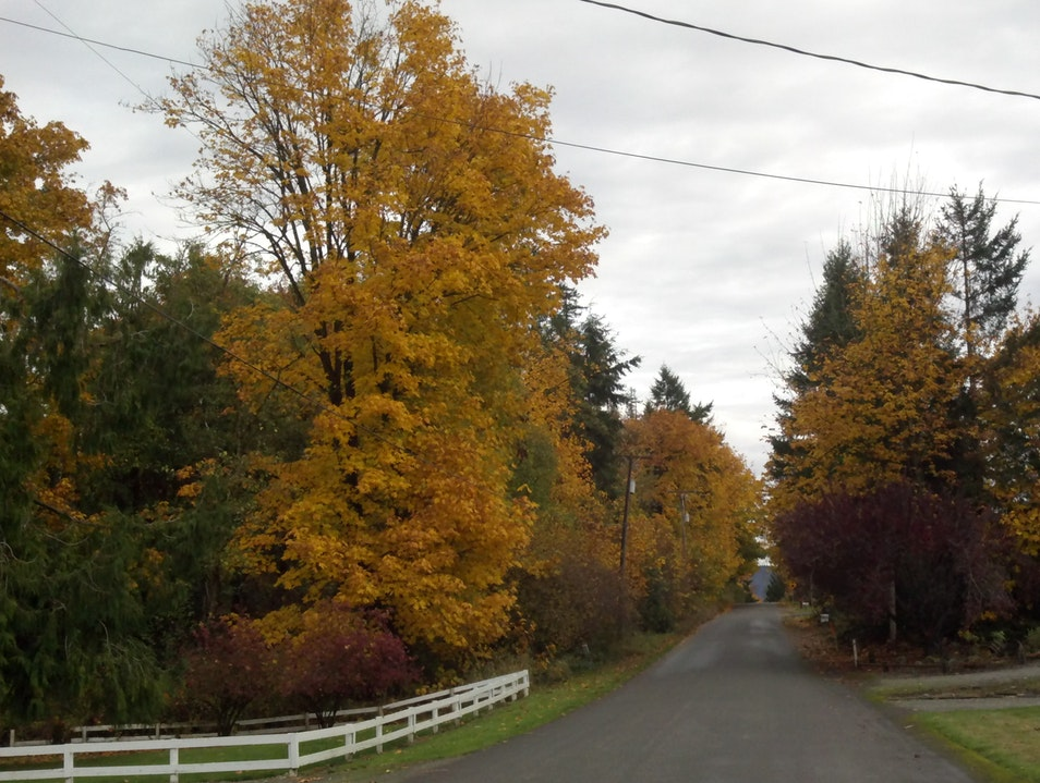 Fall Colors on the West Coast Enumclaw Washington United States