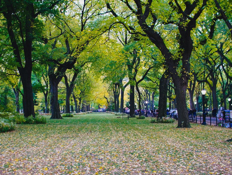 Autumn in New York New York New York United States