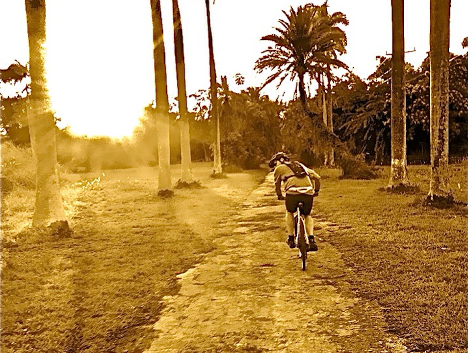 Matheson Hammock Bike Trail Coral Gables Florida United States