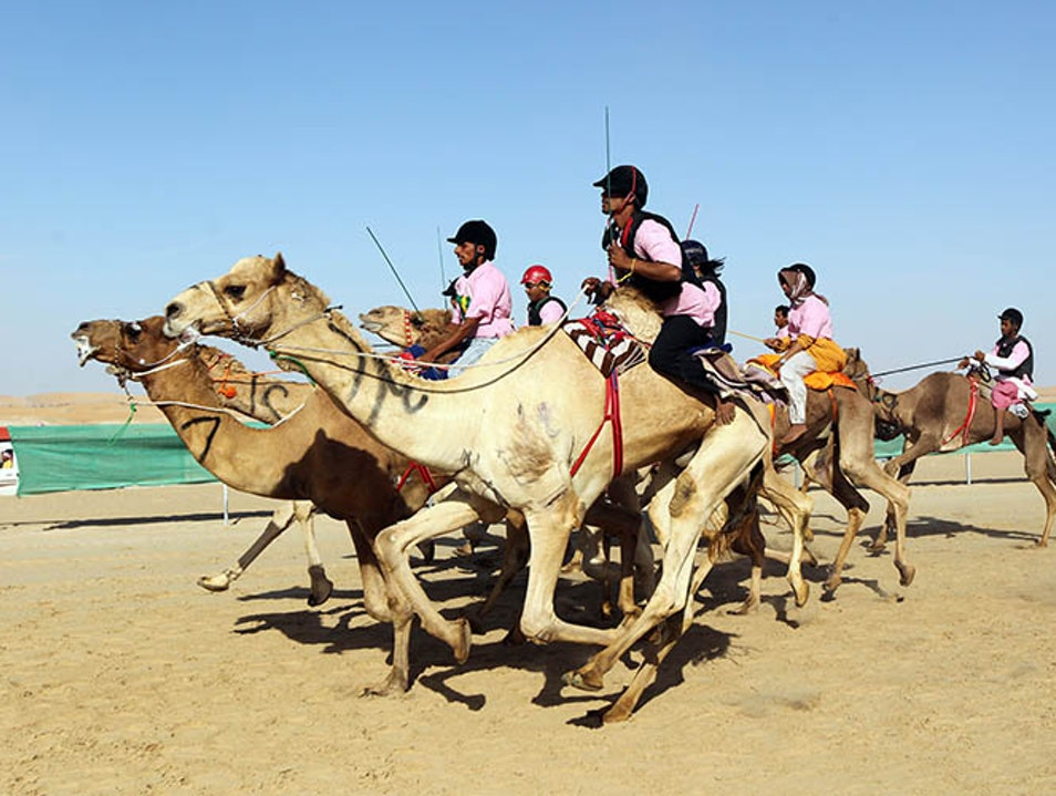 Camel Racing at Al-Wathba Racetrack Abu Dhabi  United Arab Emirates