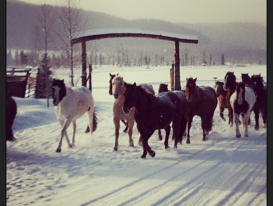 Morning Run with the Horses of Vista Verde Clark Colorado United States