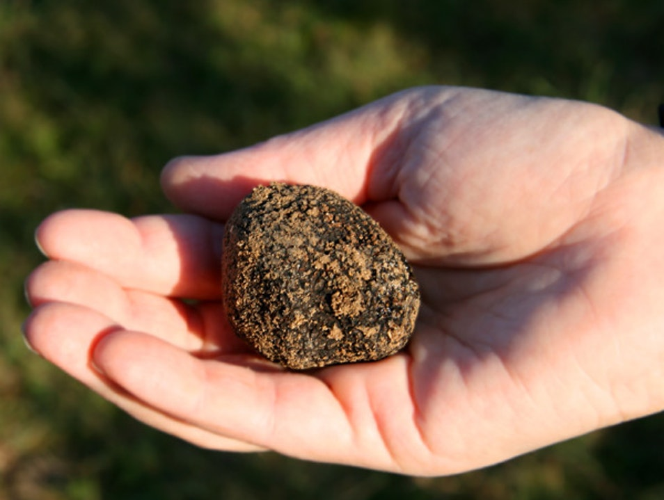 All Truffles  Mont-Tremblant  Canada
