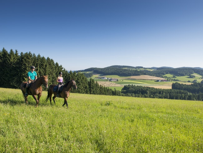 Horse Riding in the Mühlviertler Alm