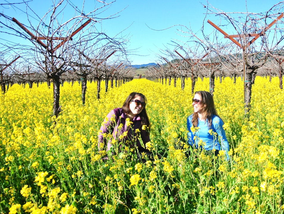 February Fields of Flowers! Napa California United States