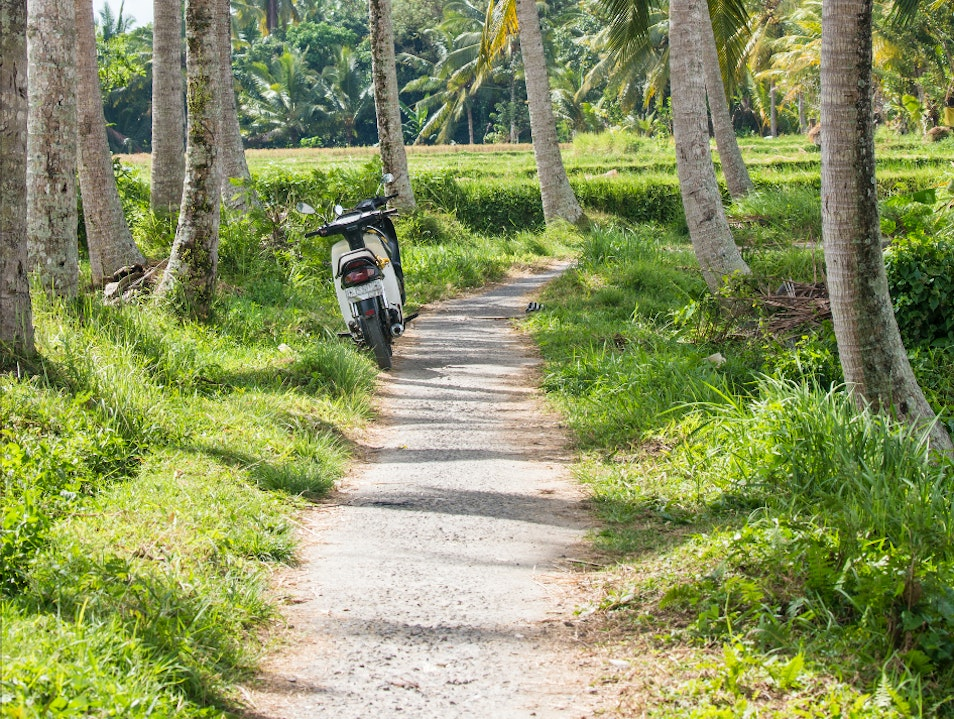 Walking the rice patty trail outside of Ubud, Bali in Indonesia Ubud  Indonesia