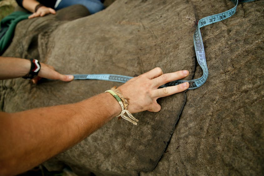Help collar (and measure) elephants on a trip to South Africa with andBeyond.