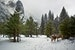 Deer in the valley Yosemite National Park California United States