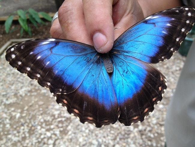 Visit the Butterfly Farm at Chaa Creek