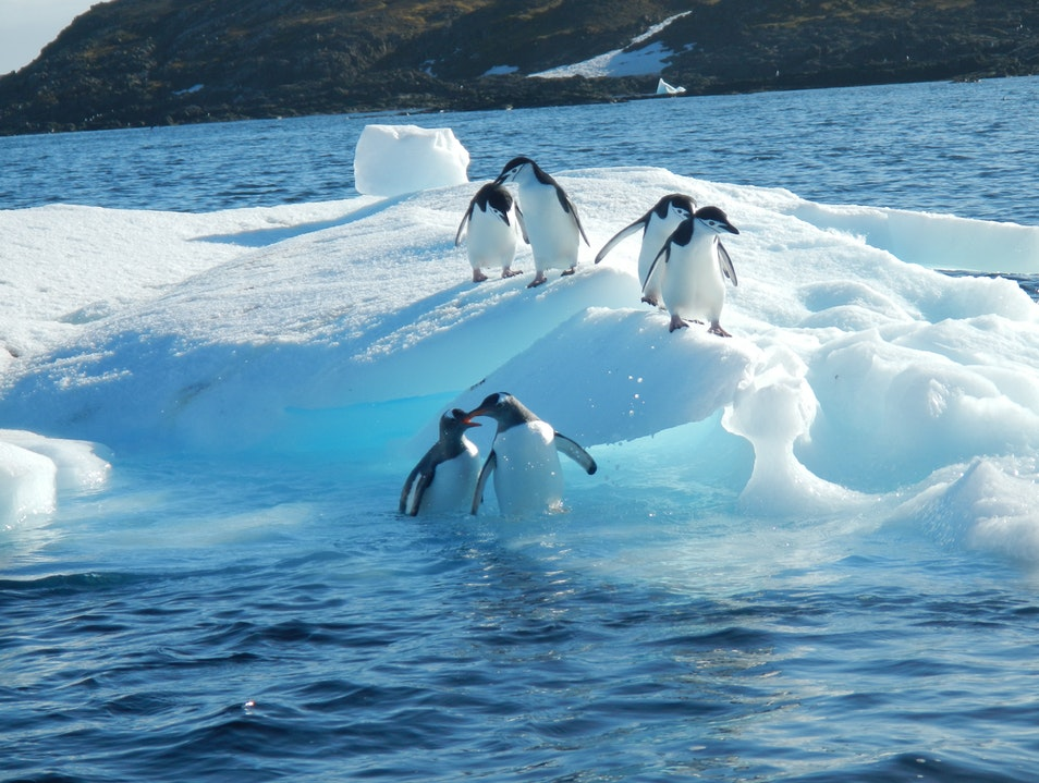 Pairing up of the Penguins in Antarctica   Antarctica