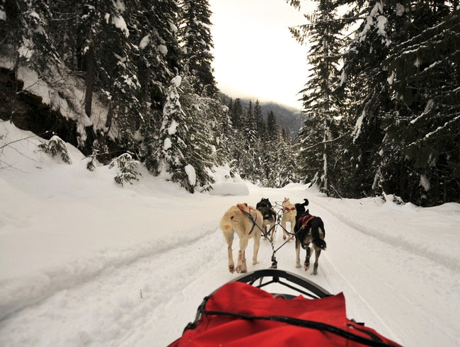 Dog Sledding in Jasper