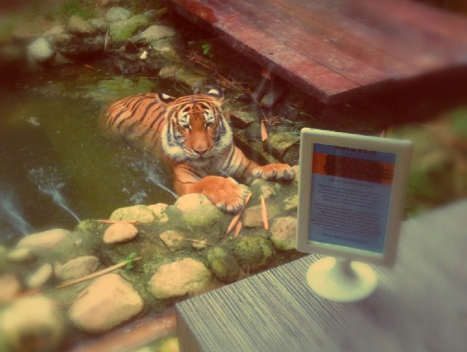 Coffee with a Side of Tiger Langkawi  Malaysia