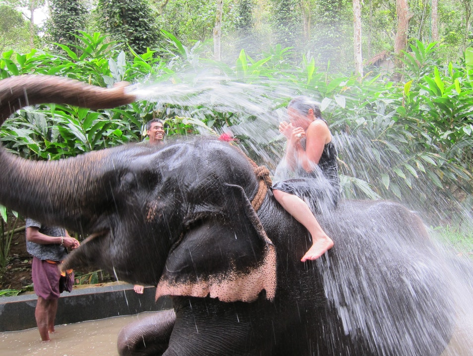Unexpected Elephant Shower Thrissur  India