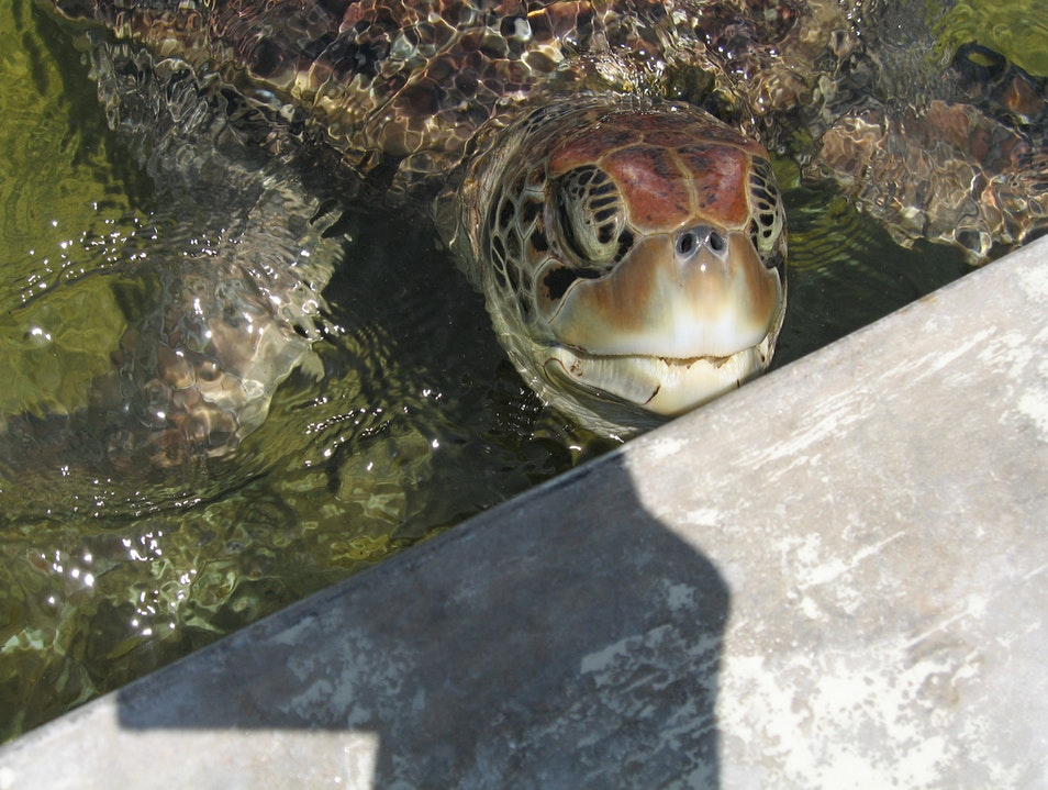 Get Close to Nature at Cayman Turtle Centre West Bay  Cayman Islands