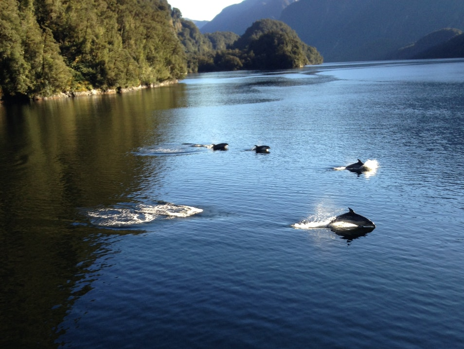 Dolphins, fjords, oh my