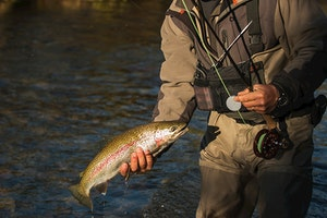 The Smoky Mountain Angler