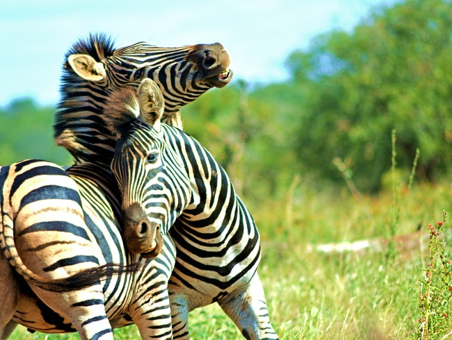 Kruger National Park, Awesome Safari Destination for ANYONE!